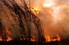 Bush Fire Season: A Message from the Ashes