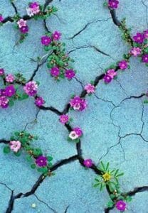 Purple flowers growing up through cracks in concrete.